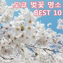 도쿄 벚꽃 명소 BEST10