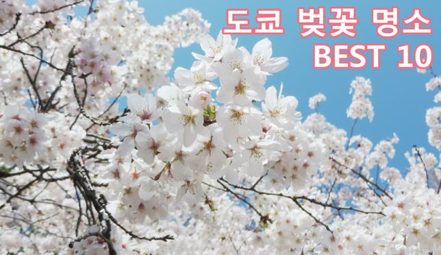 도쿄벚꽃3