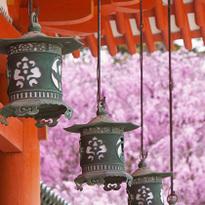Best10! ซากุระนี้ที่เกียวโต ฝั่งตะวันออก