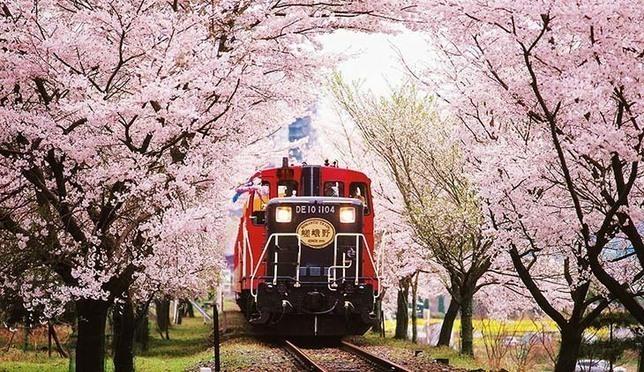 Best10! ซากุระนี้ที่เกียวโต ฝั่งตะวันตก