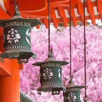 外国人に行ってほしい京都の桜スポット10選