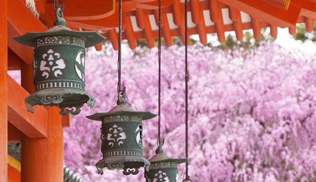 교토 벚꽃 명소 BEST_3