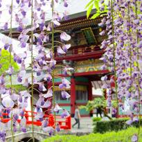"""5 สถานที่ที่คนญี่ปุ่นตกใจว่า """"คนไทยฮิต"""""""