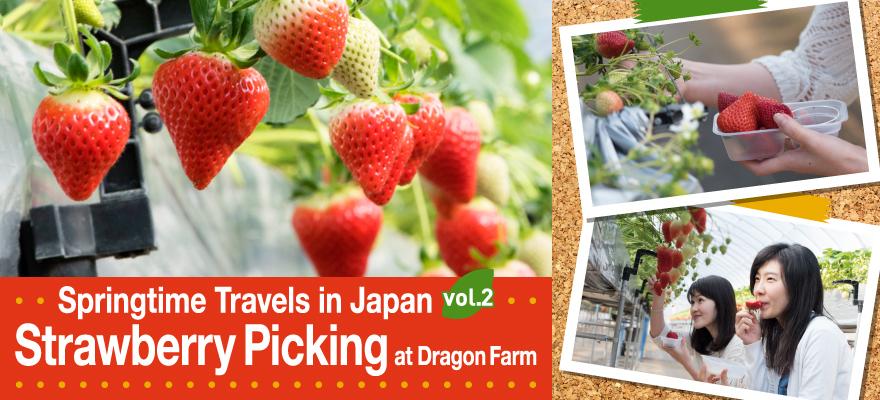 Springtime Travels in Japan vol.2 Strawberry Picking at Dragon Farm!
