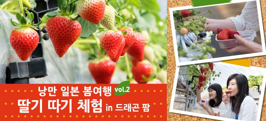 낭만 일본 봄여행: 딸기 따기 체험 in 드래곤 팜