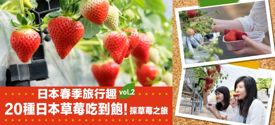 日本春季旅行趣vol.2 20種日本草莓吃到飽!採草莓之旅
