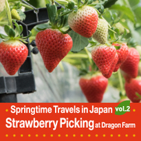 Springtime Travels in Japan vol.2 Strawberry Picking at Dragon Farm!