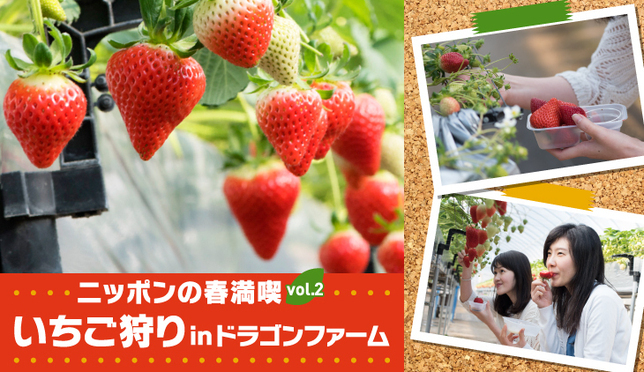 ニッポンの春満喫vol.2 いちご狩りinドラゴンファーム