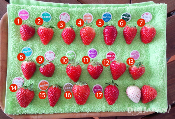 All the different strawberries.
