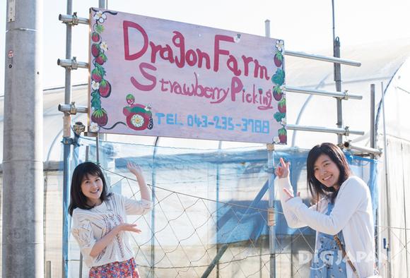 Sign at Dragon Farm