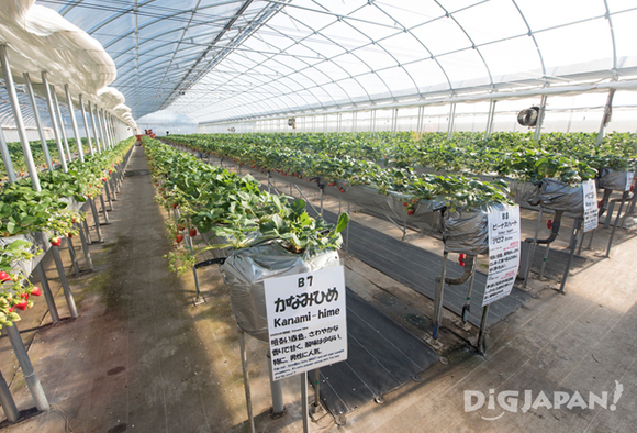 Inside the Dragon Farm greenhouse