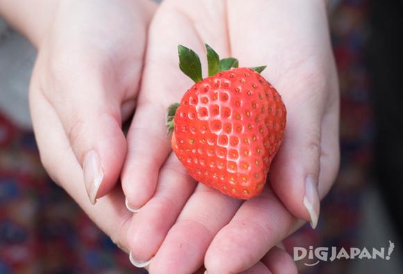 a beautiful strawberry