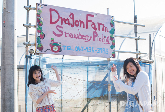 Sign at Dragon Farm