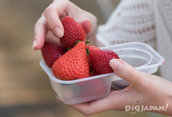 Many different types of strawberries