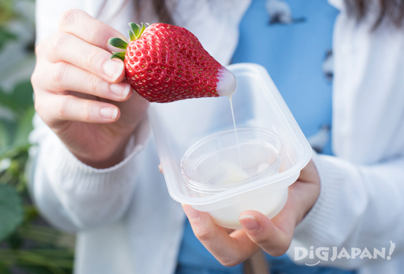 A strawberry dipped on condensed milk at Dragon Farm