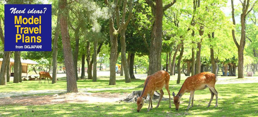 世界遺産の街 奈良で鹿とふれ合う旅