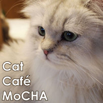 Cat Cafe MoCHA