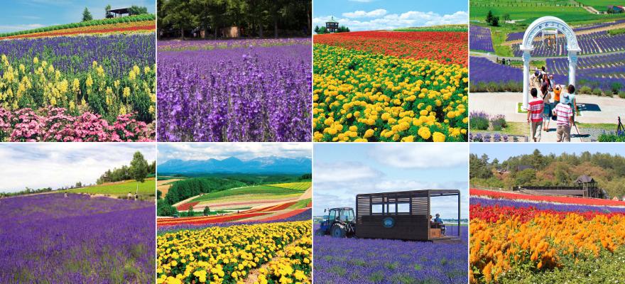 홋카이도의 후라노의 여름 꽃밭