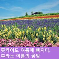 홋카이도의 여름에 빠지다, 후라노의 여름 꽃밭