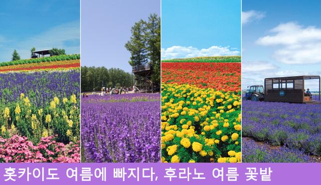 홋카이도의 후라노의 여름 꽃밭 대컨