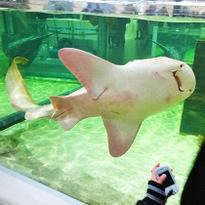NIFREL พิพิธภัณฑ์สัตว์น้ำสุดแนว!!! แหล่งบันเทิงใหม่ของโอซาก้า