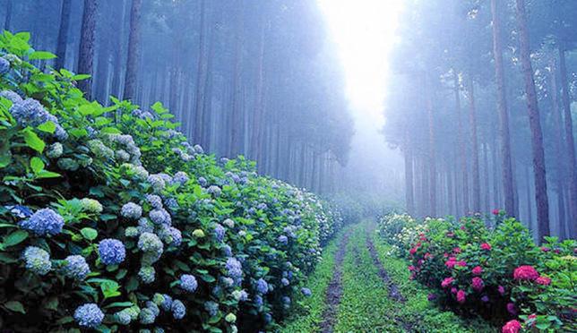 15 สถานที่พีคๆ ชมอะจิไซทั่วเกาะญี่ปุ่น