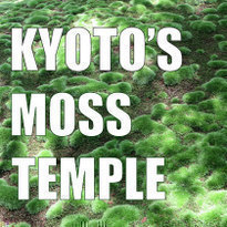 Saiho-ji: how to visit Kyoto's Moss Temple