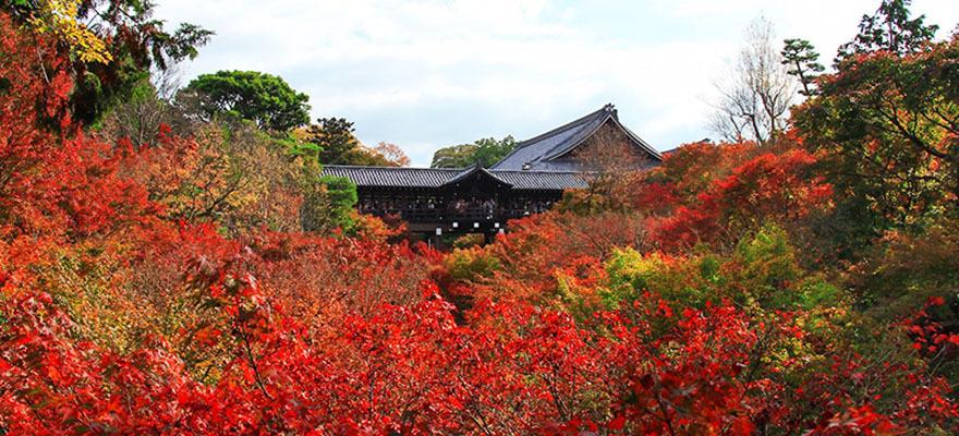 จุดชมใบไม้แดงยอดนิยมในเกียวโต