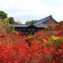 """จุดชมใบไม้แดงยอดนิยมในเกียวโต """"วัดโทฟุคุจิ"""""""