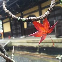 """เที่ยวชมใบไม้แดงที่วัดรางน้ำของเกียวโต """"นันเซนจิ"""""""