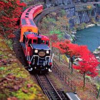 秋季京都旅行推荐!乘嵯峨野游览小火车赏别样红叶