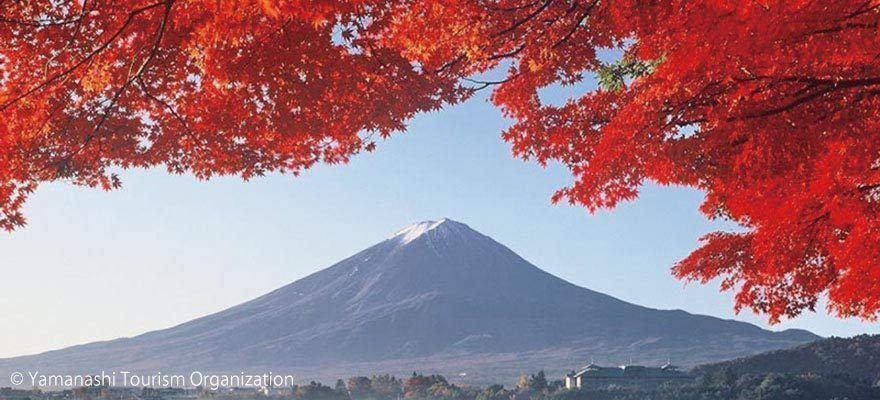 วิวนี้แหละใช่เลย! เที่ยวเทศกาลใบไม้แดงริมทะเลสาบคาวากูจิโกะ