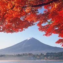 Fuji Kawaguchiko Autumn Leaves Festival