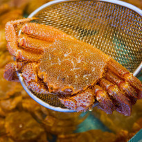 北海道最大規模市場!函館早市吃遍北海道海鮮美食!