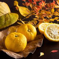 ニッポンの柚子文化はおもしろい!イタリア人から見た日本人と柚子の深い関係