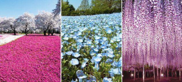ออกมาสัมผัสความงามของดอกไม้ญี่ปุ่นกันเถอะ!