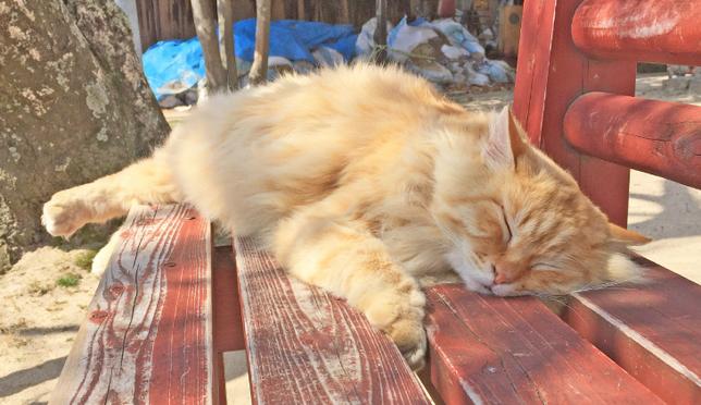 고양이를 좋아하는 사람들이 모이는 오노미치에서 고양이를 찾는 여행