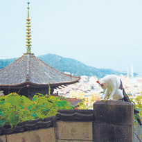 การปั่นจักรยานตามหาแมวกับ 4 สิ่งที่ไม่ควรพลาดเมื่อมาโอะโนะมิจิและชิมะนะมิไคโด