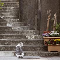 Explore Kagurazaka, Where France Meets Traditional Japan