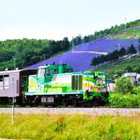 여름 홋카이도 필수 명소 라벤더 꽃밭, 여름 한정 열차 [후라노・비에이 노롯코 호]를 타고 가요!