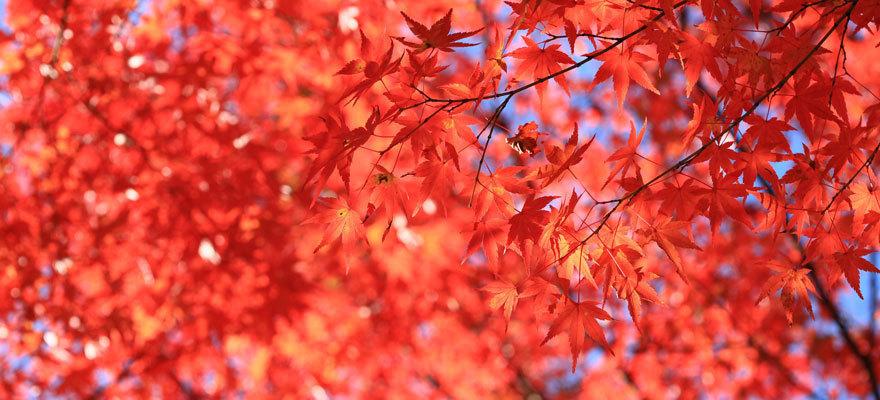 秋旅前にチェック!日本全国 紅葉の見頃予想2017