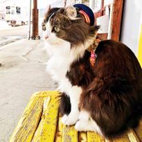 乘坐观光列车,去福岛县会津膜拜猫咪站长