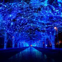この冬行きたい!東京イルミネーションスポット7選【2017~2018年決定版】