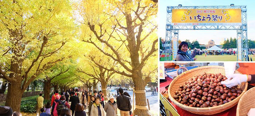 ว๊าว! ใบไม้ร่วงปีนี้ไม่ไปไม่ได้แล้ว ~ เทศกาลดูใบแปะก๊วยกลางโตเกียว ~