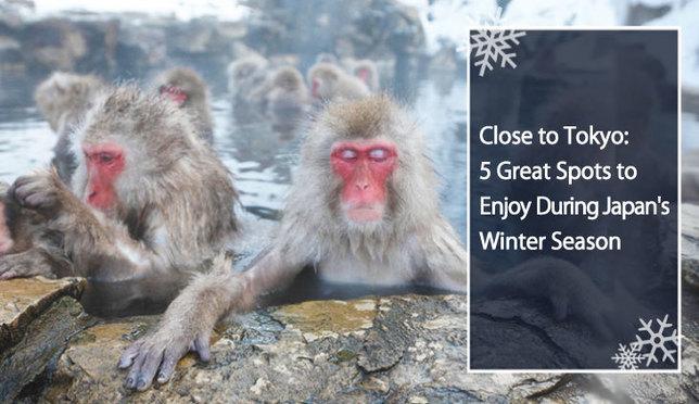 Close to Tokyo: 5 Great Spots to Enjoy During Japan's Winter Season