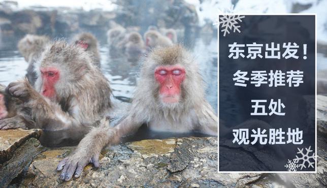 东京出发!越冷越人气的五处冬季观光胜地