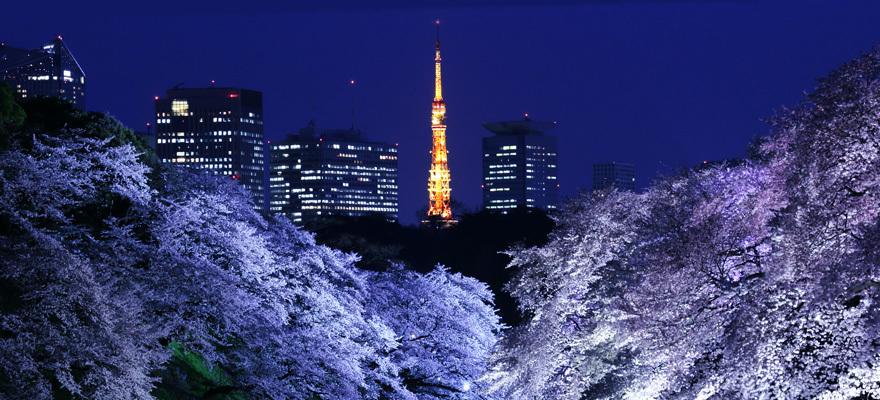 2018年樱花季!东京最棒的赏樱胜地都在这里