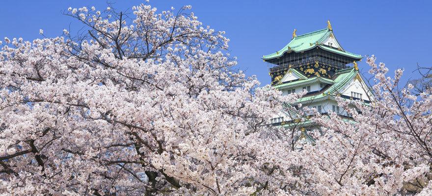 春天日本關西8大櫻花景點!追加編輯部隱藏版景點!