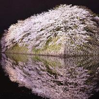2018年春天日本关西地区8大赏樱花景点