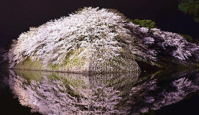 春旅におすすめ!関西の桜の名所&穴場スポット10選